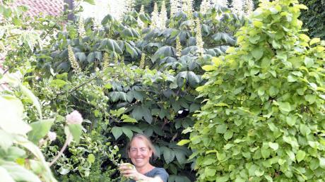 Irmgard Schwehr liebt hohe Büsche und Sträucher, denen sie auf Augenhöhe begegnet. Gras ist in ihrem Garten kaum zu finden, weil die Hausherrin ihre Zeit nicht mit dem Rasenmähen verbringen will.