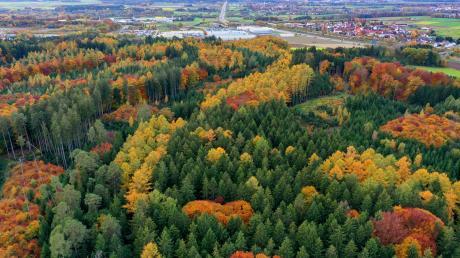 Im Wald zwischen Legoland und den Stadtteilen Deffingen (rechts im Hintergrund) und Leinheim soll südlich der Autobahn ein Mountainbike-Trail entstehen. Doch viele Anwohner haben sich gegen das Projekt ausgesprochen – erfolglos.