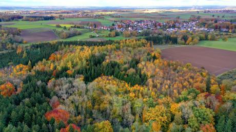 Etwa 350 Bürger aus den Günzburger Stadtteilen Leinheim (im Hintergrund) und Deffingen haben gegen einen Mountainbike-Trail südlich der Autobahn im Stadtwald in einer Unterschriftenliste unterschrieben. Das Vorhaben wird trotzdem umgesetzt.
