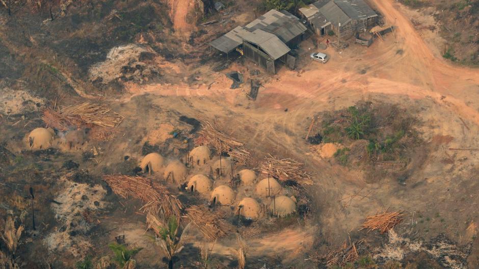 Die Abholzung des Regenwalds schreitet voran.