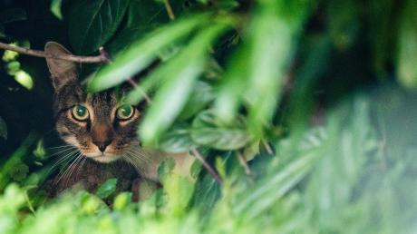 Die Jäger in den Wäldern rund um Bobingen schießen nicht auf streunende Katzen.