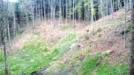 Hier im Gemeindewald in Bebenhausen liegt das geplante Quellgebiet. Einige Bäume mussten gefällt werden. Dem Pumpversuch steht nichts mehr im Wege.