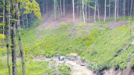 Im Wald in Bebenhausen liegt das Quellgebiet. Hier wurden kürzlich Pumpversuche durchgeführt, um das Wasservorkommen zu ermitteln.