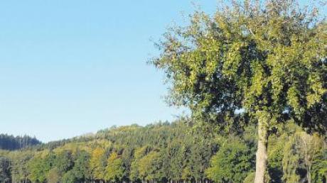 Im Wald von Bebenhausen liegt das Quellgebiet, dass die Gemeinde Kettershausen gegebenenfalls beabsichtigt, als zweites Standbein für die Trinkwasserversorgung zu erschließen.