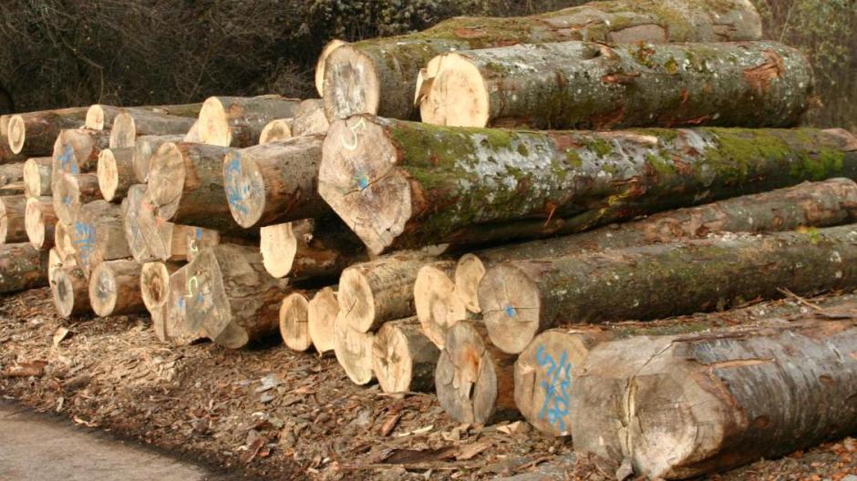 Osterberg Holzverkauf Hat Für Schmalle Ein Nachspiel Nachrichten