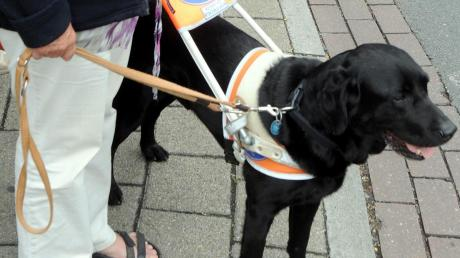 Ein Blindenhund begleitet sein Herrchen gewissenhaft, hält an, wenn eine gefährliche Situation droht und gibt Laut, wenn ein Hindernis bevorsteht.