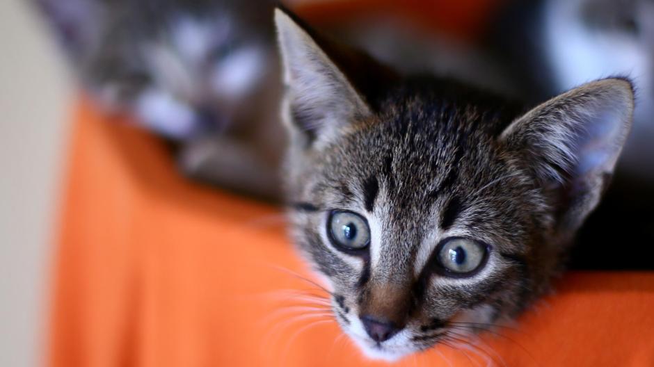 katzenbabys kostenlos abzugeben