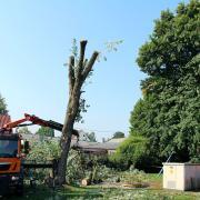 Tiefenbach-Sturmschaden-2018-08-03-001.JPG