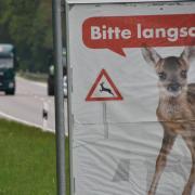 Bambi_1.jpg