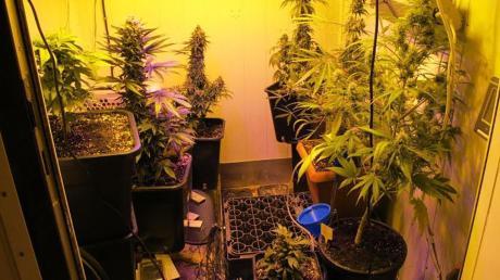 Auf einem Anwesen in Untereichen fand die Polizei im April insgesamt 1,5 Kilogramm Marihuana. Nun läuft der Prozess.
