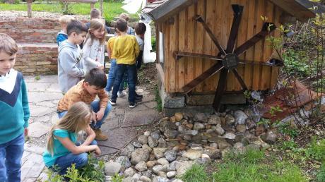 Für die Schüler der Illertisser Bischof-Ulrich-Grundschule gab es an der Umweltstation Legau einiges zu entdecken.