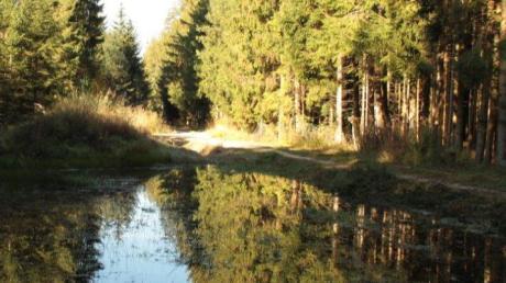 Bestnoten für den Unterrother Gemeindewald: Auch Wege wurden renoviert und ein Biotop angelegt.