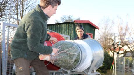 Christian Hufnagel netzt einen Christbaum ein. Der 26-Jährige arbeitet für das Forstunternehmen seines Onkels aus dem Sauerland und verkauft Nordmanntannen in Weißenhorn, Illertissen, Bellenberg und Babenhausen.