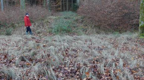 Ungeschulte Betrachter sehen hier nur Wald. Helmut Märkle glaubt, an dieser Stelle zwischen Kellmünz und Illereichen Spuren unserer Vorfahren entdeckt zu haben.