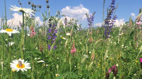 Blühflächen sollen Insekten und anderen Tieren Rückzugsorte und Nahrung bieten.