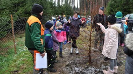 Die Kinder bewunderten den Setzling eines Mammutbaums.