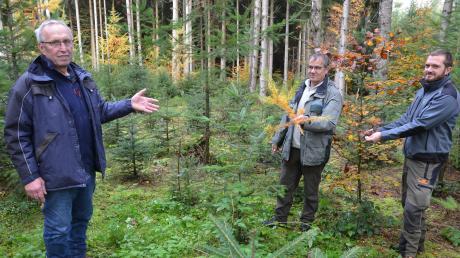 Anton Vogt (links) aus Jedesheim ist stolz, dass aus seinem Fichtenbestand innerhalb eines Vierteljahrhunderts ein Klimawald wurde. Rechts: Förster Bernd Karrer und Jan Wohlhüter von der Forstbetriebsgemeinschaft Neu-Ulm.