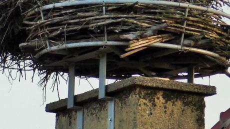 Das Storchennest auf dem Dach des Kettershauser Kindergartens soll weichen. Künftig sollen die Tiere außerhalb des Dorfes nisten.
