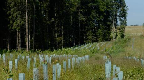 Die Stadt Weißenhorn will bestehende Waldflächen vergrößern oder miteinander verbinden. Das Konzept Klimawald sieht vor, dass sich Bürger, Firmen und andere Einrichtungen am Aufbau der neuen Wälder beteiligen.
