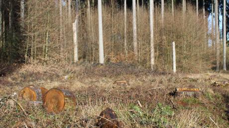 Klimaextreme machen dem Wald zunehmend zu schaffen. Stürme setzen enorme Hebelkraft an den Bäumen an, die teils bereits durch Dürren geschwächt sind. Wärmere Temperaturen begünstigen die Verbreitung von Schädlingen.