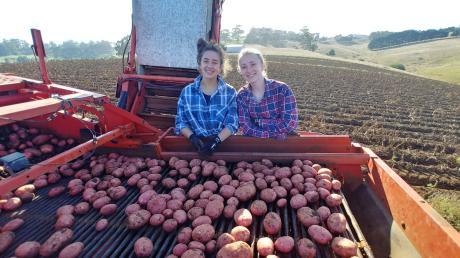 Statt Unterricht stand für die deutsche Schülerin Julia Bleher (rechts) Mithelfen bei der Kartoffelernte auf dem Programm.