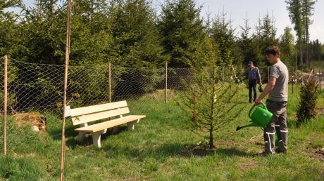 Inmitten der Baum-Setzlinge hat Karl Schregle von der Waldbesitzervereinigung Babenhausen zwei Ruhebänke platziert.