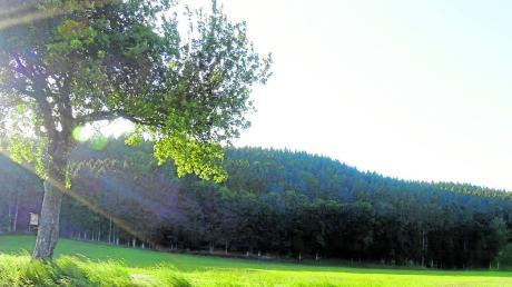 Blick auf den Wald bei Bebenhausen. Er ist Teil des Gemeindewaldes.
