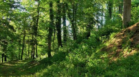 Blick in das Waldstück, das dem Kindergarten zunächst testweise von der Gemeinde Kettershausen zur Verfügung gestellt wird.