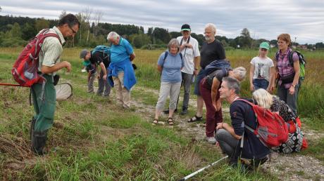 Während einer Exkursion durch das Kettershauser Ried lenkten die Biologen Michael Schneider (rechts kniend) und Ralf Schreiber (links) den Blick auf seltene Pflanzen und Tiere. Davon finden sich in diesem Gebiet einige.