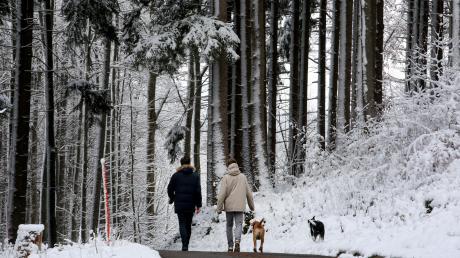 Spaziergänger, die ihre Hunde im Wald ohne Leine umherrennen lassen, könnten, ebenso wie unvorsichtige Ausflügler oder Wintersportler, Wildtiere aufscheuchen.