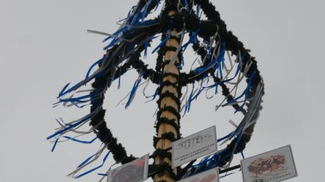 Bellenberg stellt einen Baum auf – hygienisch einwandfrei.