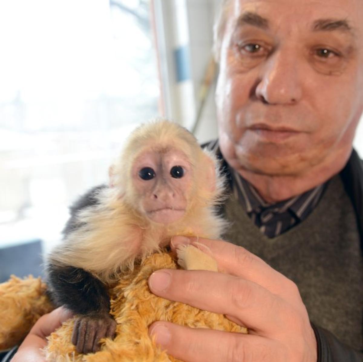 Ansprechend Haustier Affe Foto Von München: Chef Des Tierheims: Justin Biebers Steht