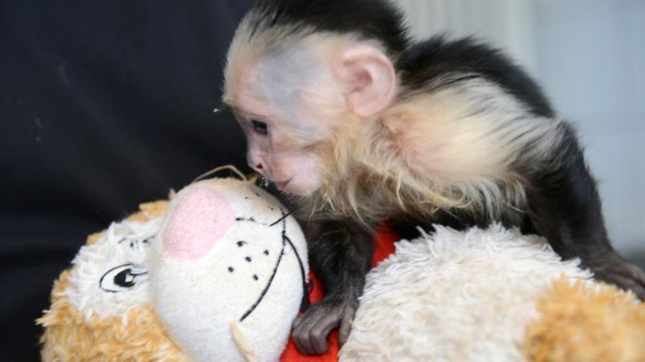 Neue Zuhause Fur Mally Justin Biebers Affchen Lebt Jetzt In
