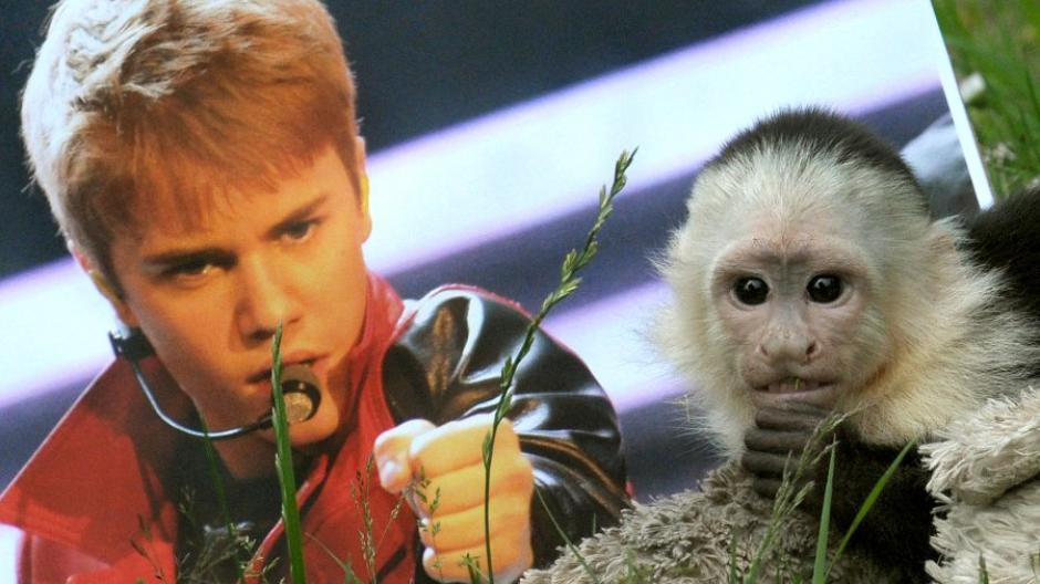 Mally Molly Justin Biebers Ex Affe Bekommt Eine Freundin Promis