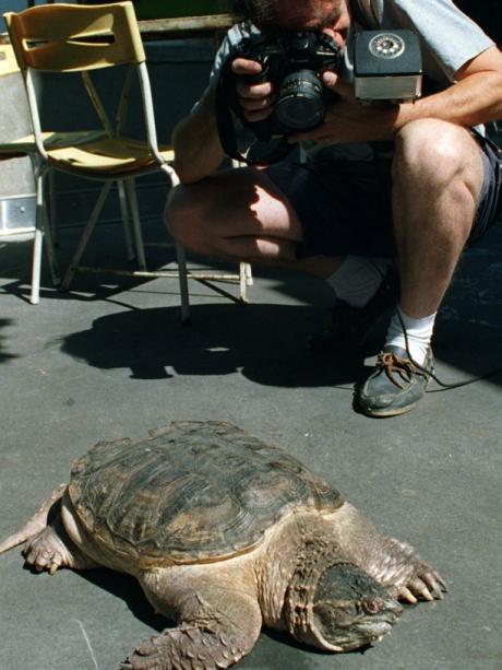 Allgäu Weiher Wird Ausgepumpt Es Wird Ernst Für Killer Schildkröte