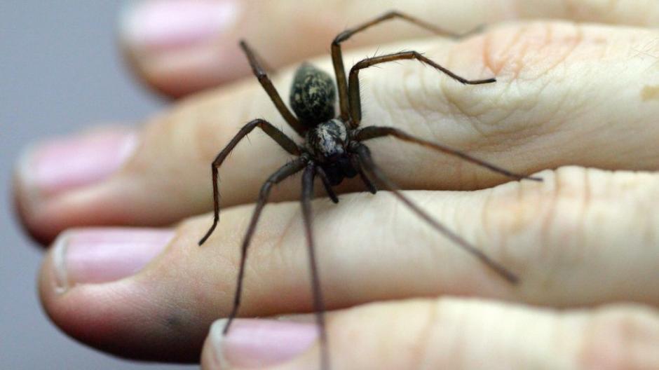 Tiere Spinnen Wanzen Und Flöhe Diese Tierchen Leben In Ihrer