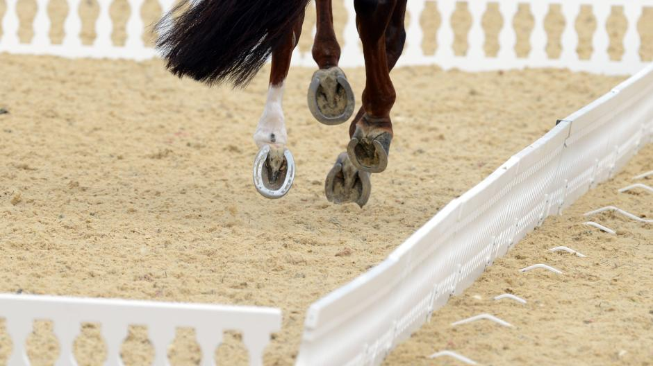 frau pferd innere blutungen