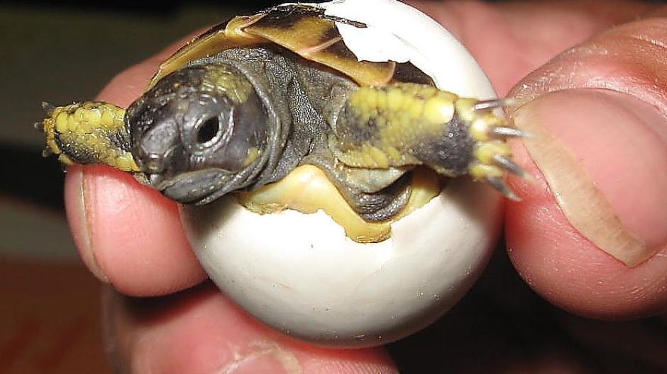 Kurioser Behördengang Schildkrötenbabys Schlüpfen Im Landratsamt