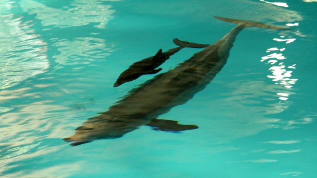 n rnberger tiergarten erleichterung im zoo delfin baby ist gesund zur welt gekommen. Black Bedroom Furniture Sets. Home Design Ideas