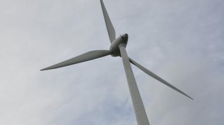 Beeinträchtigen Windräder die Tierwelt?