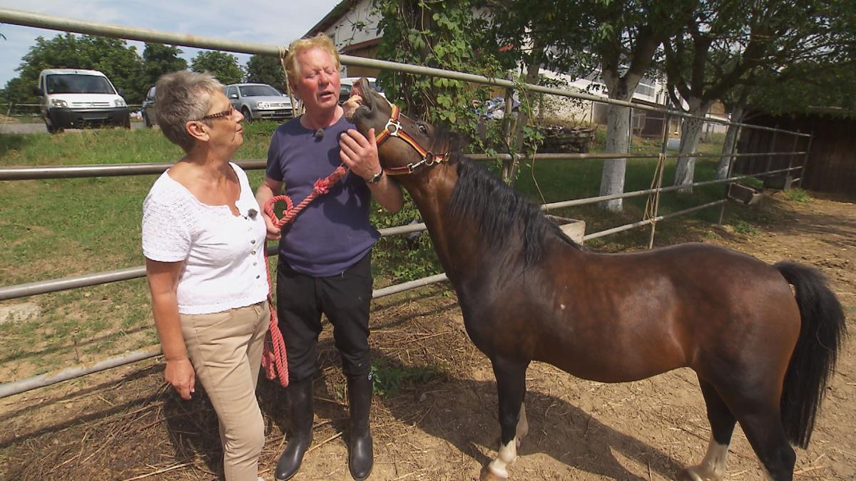 Bauer sucht Frau 2015: Cowboy Gregor stellt Beate seinen
