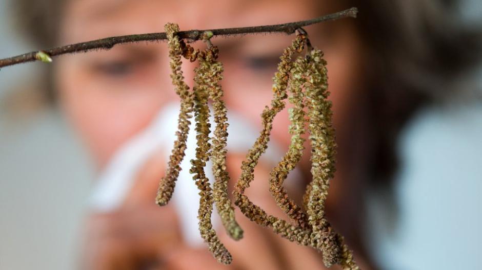 Pollen-Alarm an Weihnachten: Allergiker aufgepasst: Pollen fliegen ...