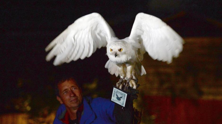 Munchen Schnee Eule Bringt Geschwistern Neues Harry Potter Buch Augsburger Allgemeine
