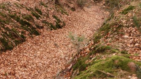 Im Schiltberger Forst sind heuer viele Spaziergänger unterwegs.