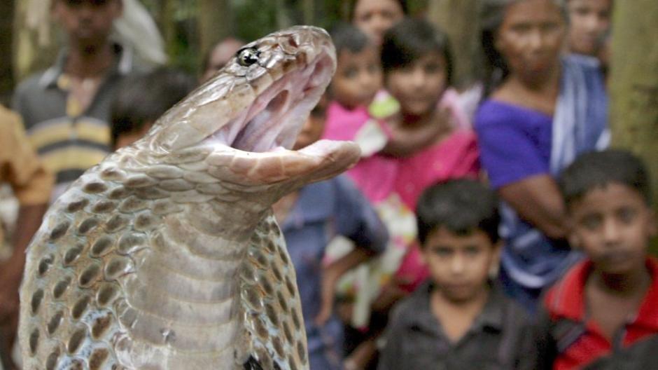 Forscher: Schlangenbisse sind eine vernachlässigte Gefahr