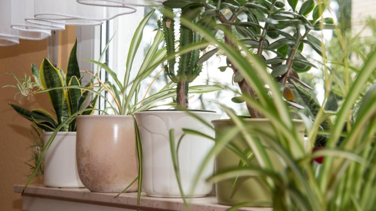 Tipps Wie Zimmerpflanzen Die Wohnung In Eine Grüne Oase Verwandeln