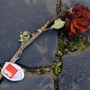 Eine verwelkte Wahlkampf-Rose der SPD - Sinnbild für den Zustand einer Volkspartei außer Dienst. Foto:Julian Stratenschulte