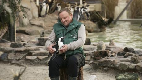 """Der Kommissar und die Pinguin-Dame: Bei seinen Undercover-Ermittlungen im Zoo schließt  """"Tierpfleger"""" Frank Thiel (Axel Prahl) den Pinguin Sandy in sein Herz."""