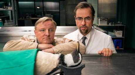 Ein Pinguin in der Rechtsmedizin – Fans von Thiel (Axel Prahl) und Boerne (Jan Josef Liefers) durften sich auf einen humorvollen Tatort freuen.