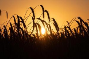 Bekommen Bauern Hilfe? Experten machen Bestandsaufnahme zur Dürre